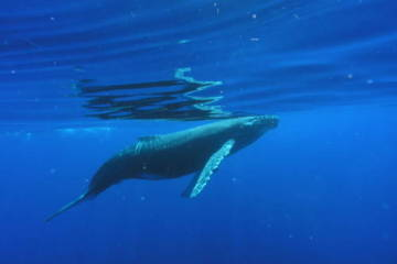 Maui Whale Watching Insights