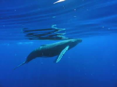 Maui Whale Watching Insights
