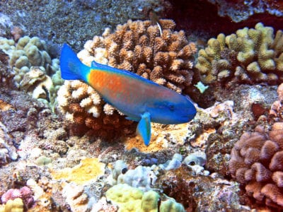 MauiMagic Misc Underwater 078
