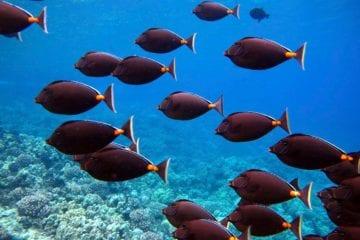 School Of Fish In Maui