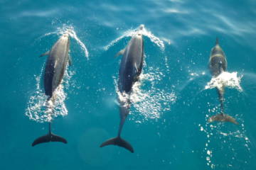 SEE DOLPHINS IN MAUI
