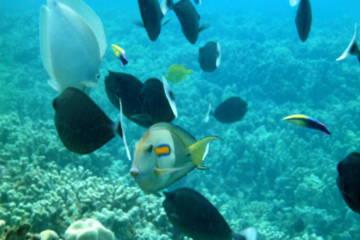 What Fish Might You See At Molokini?