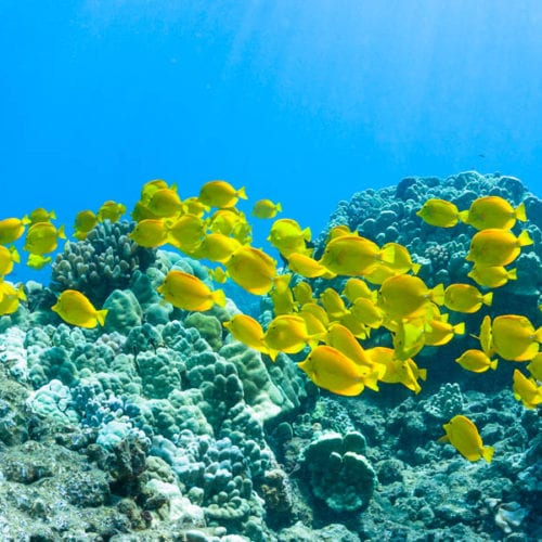 Banner Reef 1200 1