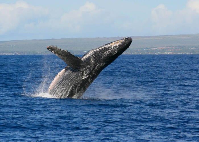Banner Whale 1