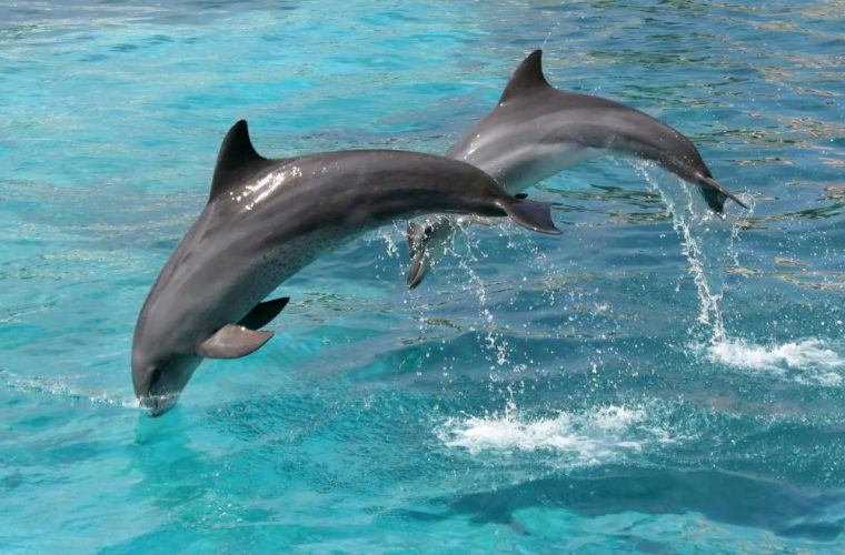 Dolphins In Maui – All That You Need To Know
