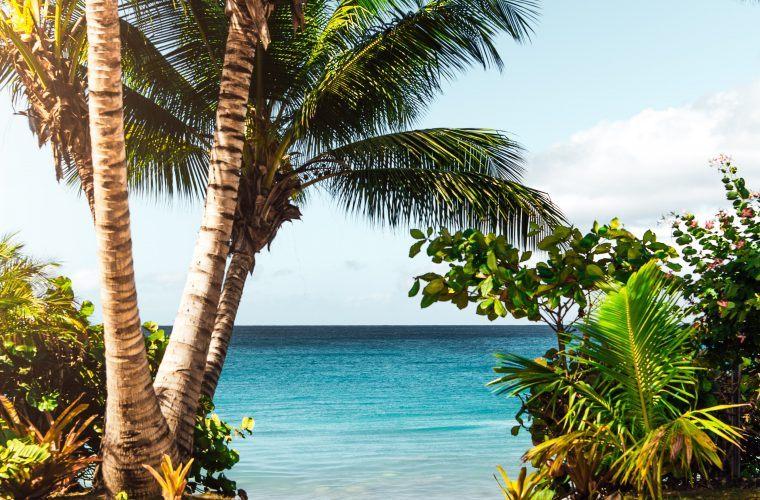 The Tree In Hawaii Seashore