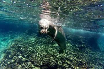 Endangered Species: Hawaiian Monk Seal