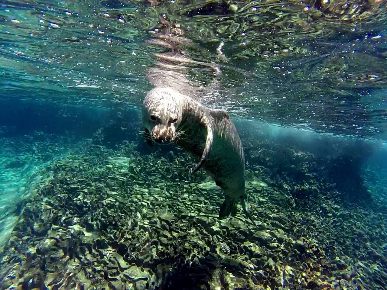Monk Seal 4
