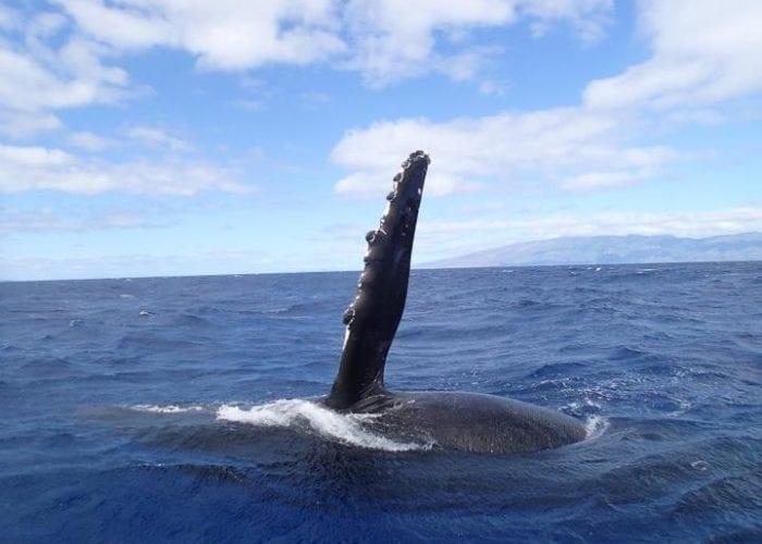 Photo Whale2