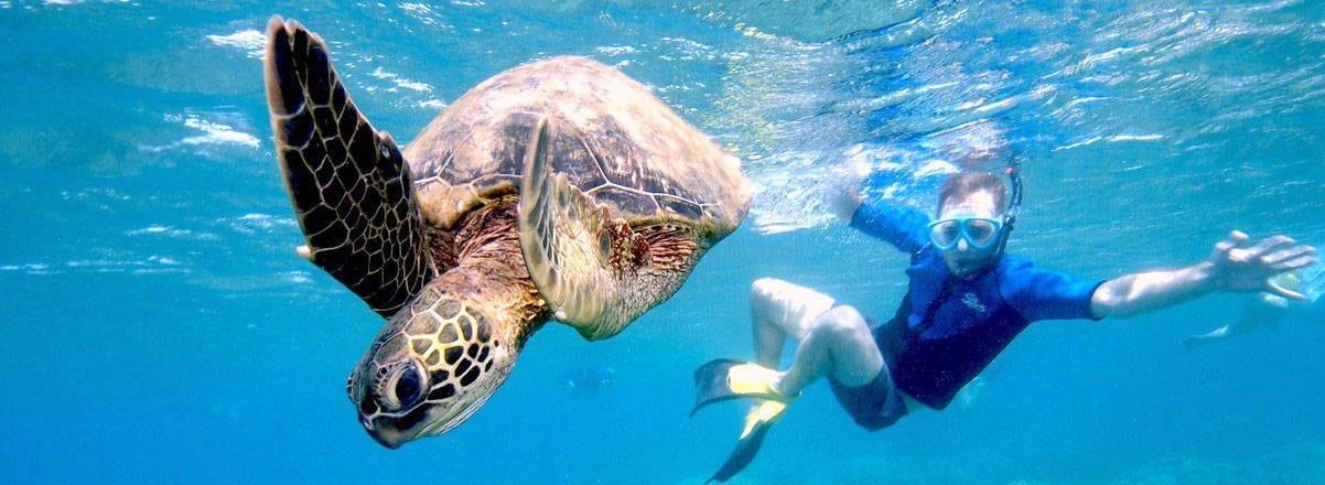Molokini Maui Afternoon Snorkel