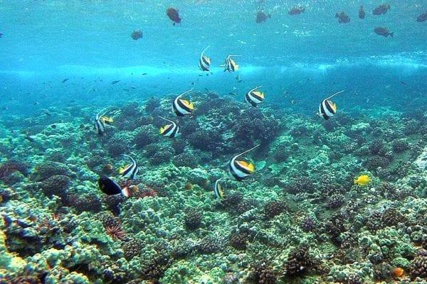 Reefandfish
