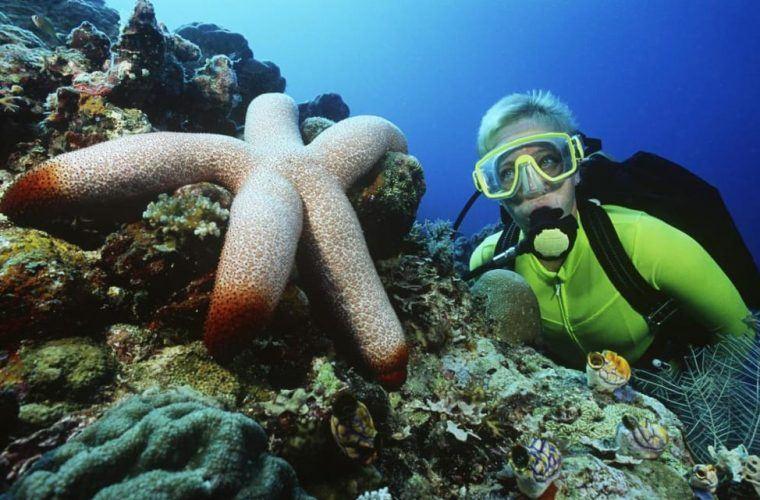 Scuba Diving In Maui