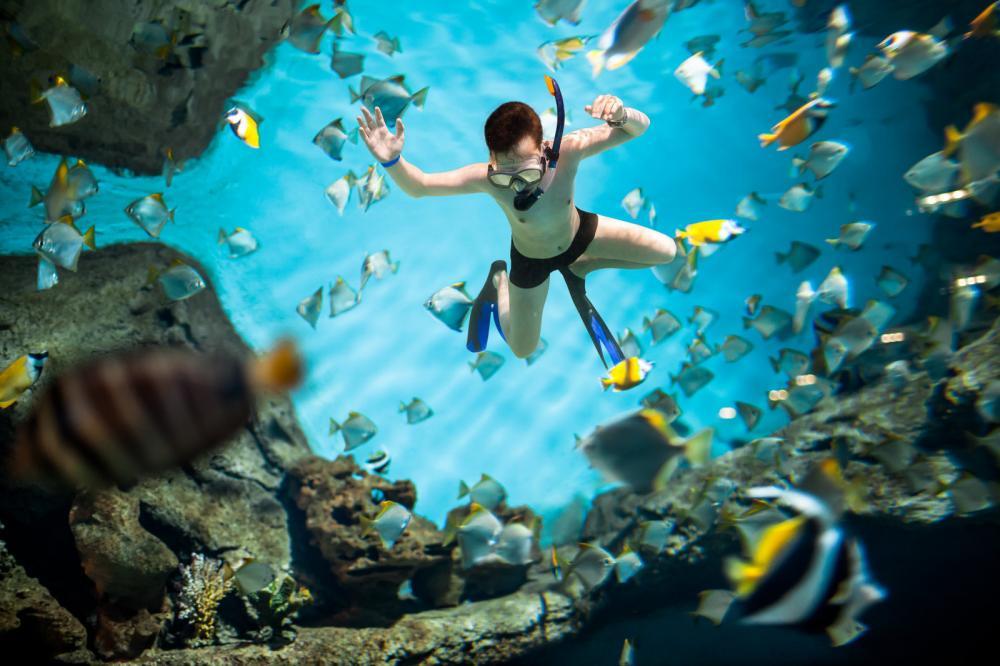 snorkeler-underwater
