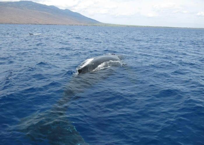 Whale Willie