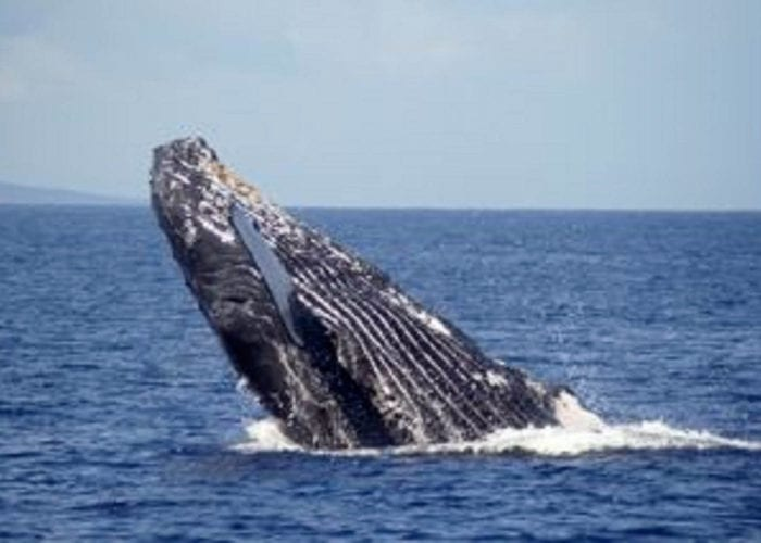 Whales IMG 1051