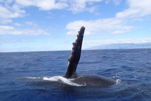Whales Photo
